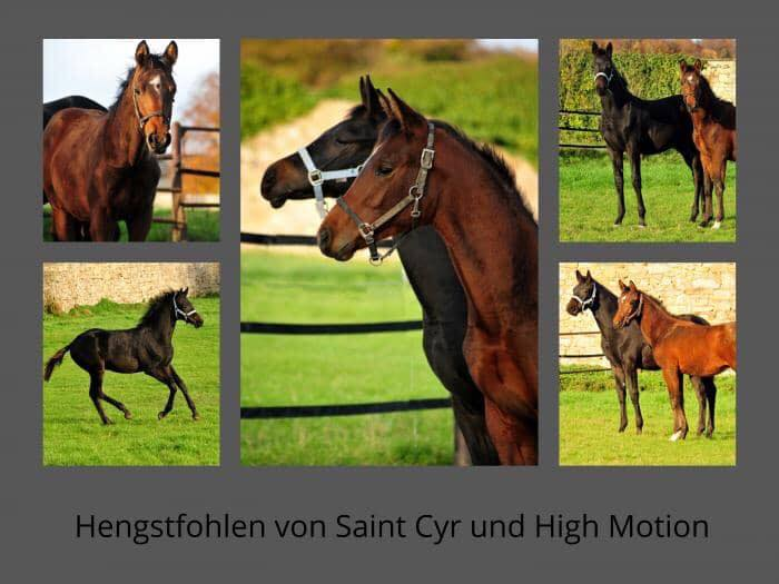 Hengstfohlen von Saint Cyr u.d. Pr.St. Under the moon v. Easy Game und High Motion x Caprimond - Foto: Beate Langels